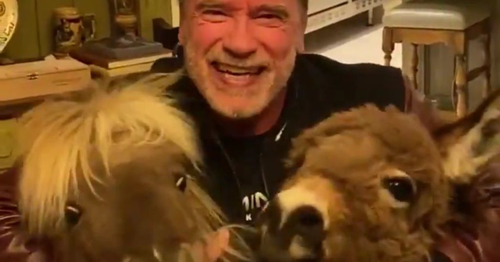Arnold Schwarzenegger Is Self Isolating With His Tiny Horse And Donkey And It Is DELIGHTFUL