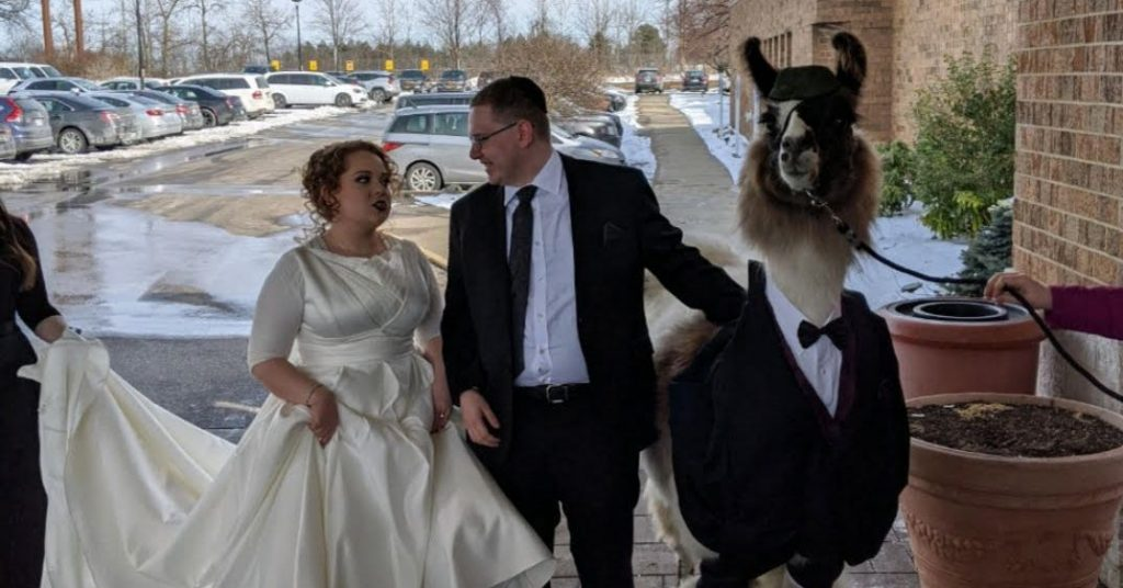 This Man Really Brought A Llama As His Date To His Sister's Wedding